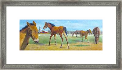 Delval Horse Farm In Spring Framed Print by Oz Freedgood