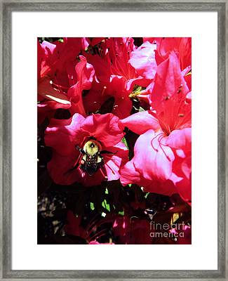 Framed Print featuring the photograph Delving Into Sweetness by Robyn King