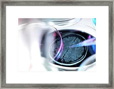 Dementia Research Framed Print