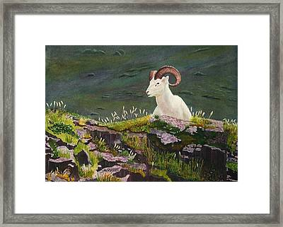 Denali Dall Sheep Framed Print by Mike Robles