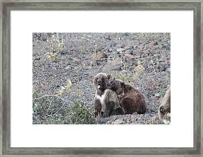 Denali Grizzly Cubs Framed Print by David Wilkinson