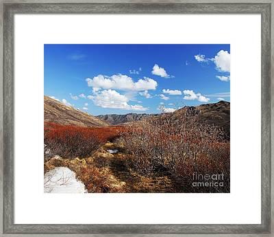 Denali Tundra Framed Print by Mel Steinhauer