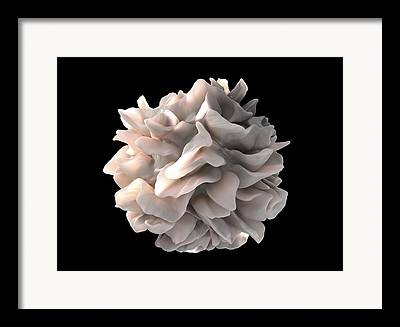 Scanning Electron Microscope Framed Prints