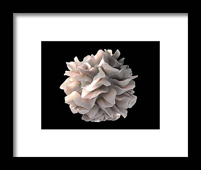 Microscopes Framed Prints