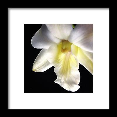 Orchids Framed Prints