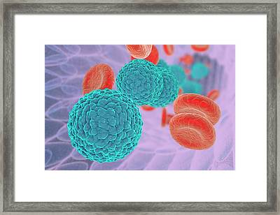 Dengue Virus In Blood Framed Print by Kateryna Kon