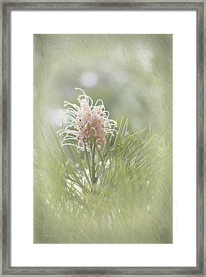 Framed Print featuring the photograph Denise by Elaine Teague