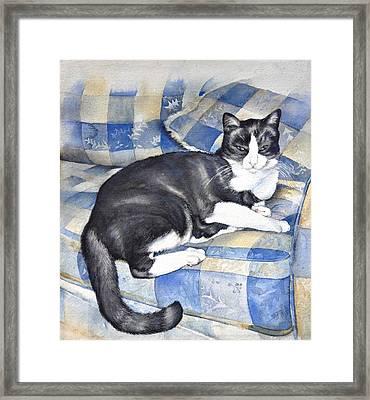 Denise's Cat Framed Print by Sandra Phryce-Jones