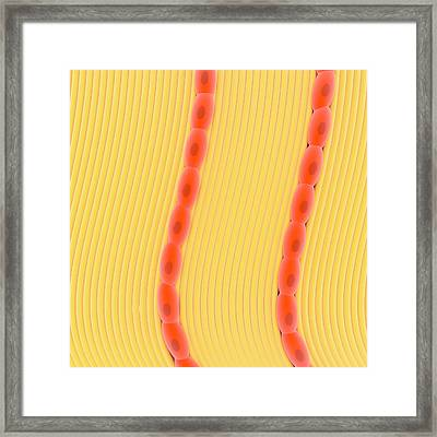 Dense Connective Tissue Framed Print by Science Photo Library