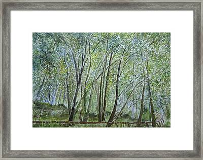 Dense Forest Framed Print