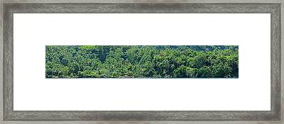 Dense Forest On The Coast, Papua New Framed Print by Panoramic Images