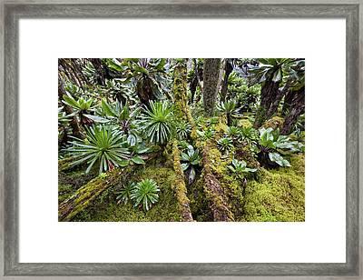 Dense Forest With Senecias Lobelia Framed Print