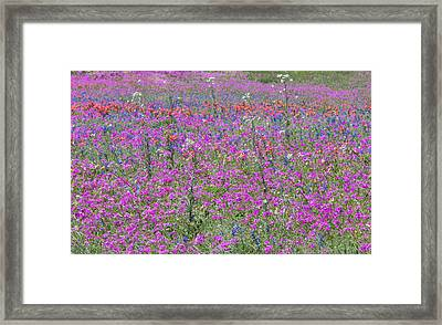 Dense Phlox And Other Wildflowers Framed Print