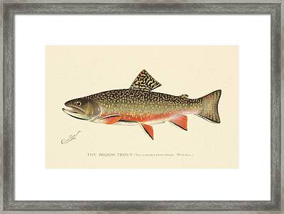 Denton Brook Trout Framed Print