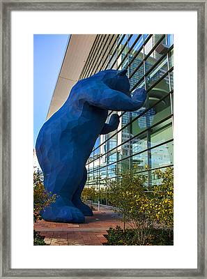 Denver Bear Framed Print