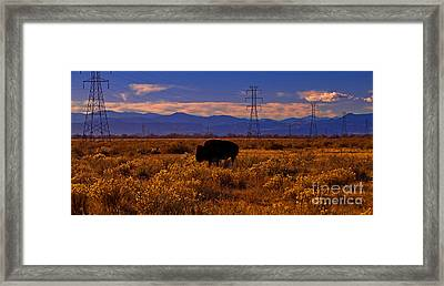 Denver Bison Framed Print