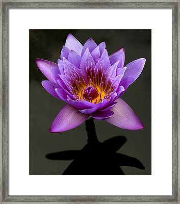 Denver Lily Framed Print