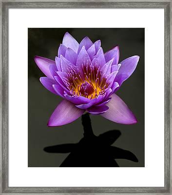 Denver Lily Framed Print