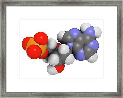 Deoxyadenosine Monophosphate Molecule Framed Print