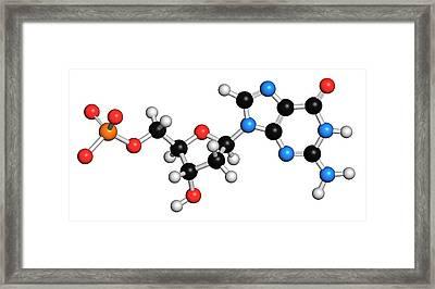 Deoxyguanosine Monophosphate Molecule Framed Print