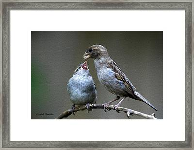 Dependence Framed Print by Gerald Marella