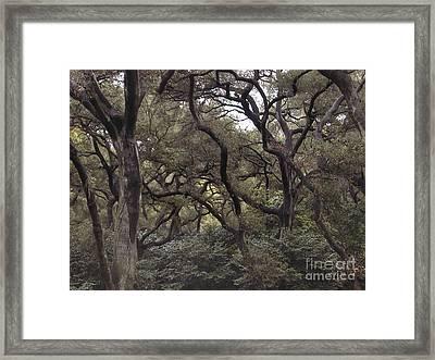 Descanso Oaks 3 Framed Print