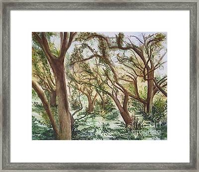 Descanso Oaks Framed Print
