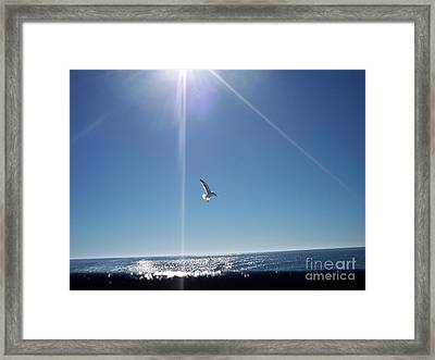 Descending Gull Framed Print