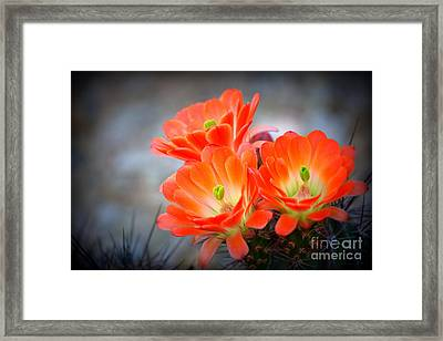 Desert Ablaze  Framed Print by Ruth Jolly