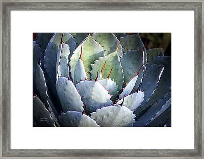 Desert Artichoke Agave Framed Print