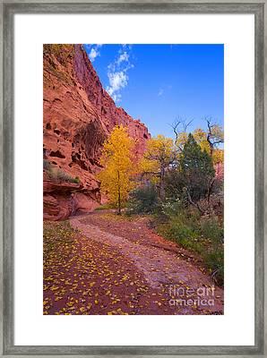 Desert Autumn Framed Print