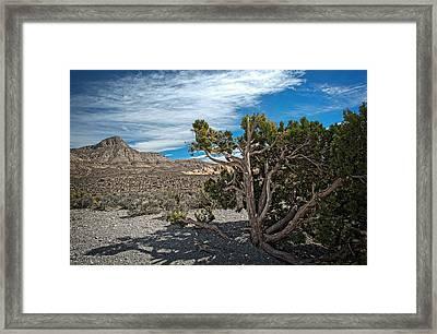 Desert Beauty Framed Print by Jen Morrison