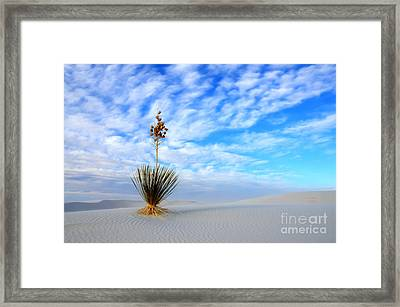 Desert Beauty White Sands New Mexico Framed Print by Bob Christopher