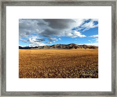 Desert Bliss Framed Print by Kimberly Maiden