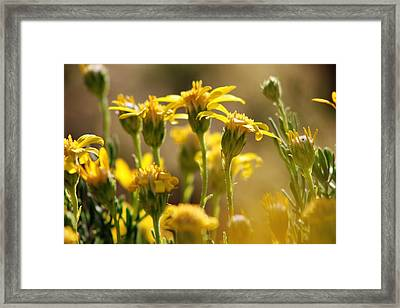Desert Bloom At Black Rock Canyon In Jtnp Framed Print