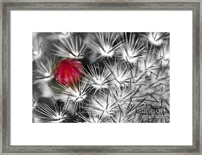 Desert Bloom Bw Framed Print