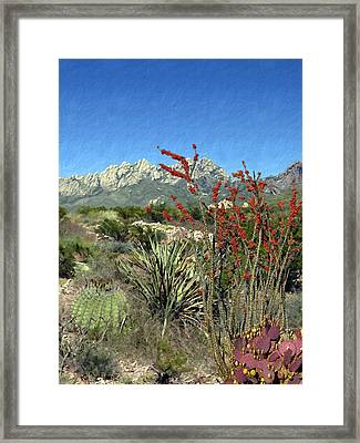 Desert Bloom Framed Print