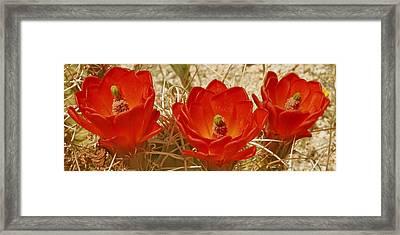 Desert Blooms Framed Print by Ben and Raisa Gertsberg