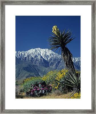 Desert Blooms Framed Print