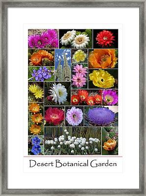 Desert Botanical Garden Framed Print by Cindy McDaniel