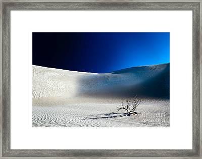 Desert Branch Void Framed Print by Julian Cook