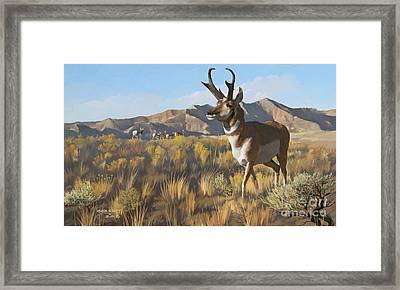Desert Buck Framed Print
