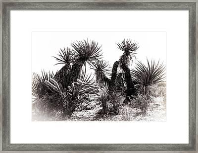 Desert Cactus Framed Print by Brenda Giasson