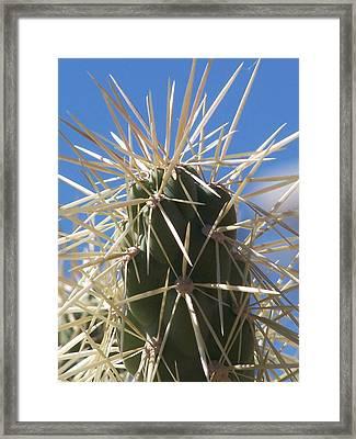 Desert Cactus Framed Print