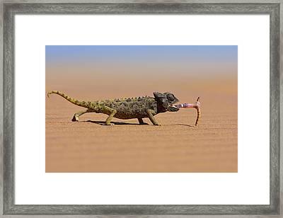 Desert Chameleon Catching A Worm Framed Print by Freder