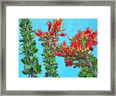 Desert Coral Framed Print