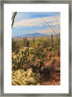 Framed Print featuring the photograph Desert Day by Alicia Knust
