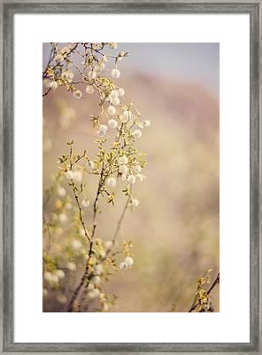 Desert Delicates Framed Print
