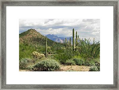 Desert Delight Two Framed Print by Marilyn Smith