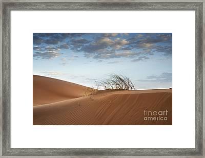 Desert Detail Framed Print